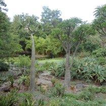Mt. Coot-tha Botanical Gardens